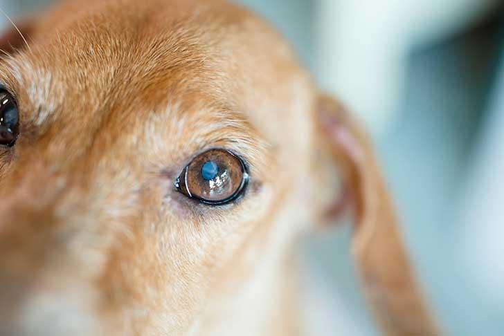Oggi è la giornata del cane, il miglior amico dell'uomo